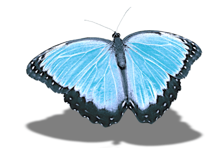 butterfly-2554039_1920-e1506376800777.png