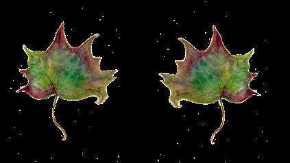 leaf-889198_1280